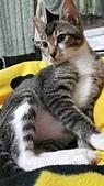 認養代替購買  CAT:20150219_002639.jpg