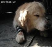 我の...狗...:A 012.1.jpg