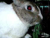 我の兔....:momin1