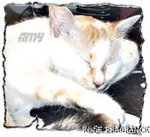 我の...貓...:a2.jpg