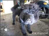 我の...狗...:熊.jpg