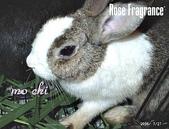 我の兔....:07270021.1.jpg