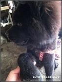 我の...狗...:熊3.jpg
