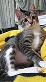 認養代替購買  CAT:20150219_002643.jpg