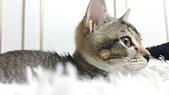 認養代替購買  CAT:20150125_182825.jpg