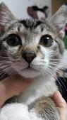 認養代替購買  CAT:20150125_184207.jpg