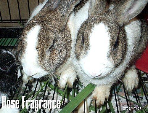 我の兔....:07270026.1.jpg