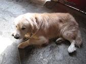 我の...狗...:A 014.1.jpg