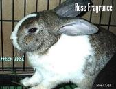 我の兔....:07270022.1.jpg