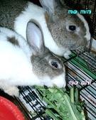我の兔....:momin0