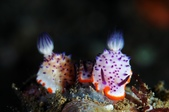 20170406-07 Ambon Diving 安汶潛水趣( The End):取暖中