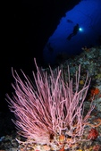 20170405 Ambon Diving 安汶潛水趣:意境!
