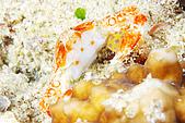 20080425Moalboal - 20080502:螃蟹,像抱著一顆美式足球