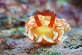 9607-東北角:笑起來甜甜的海蛞蝓