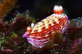 9607-東北角:非常Colorful的海蛞蝓