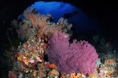 20170405 Ambon Diving 安汶潛水趣:像幅畫一樣