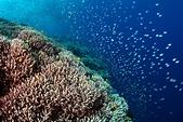 20191009_Panglao,Bohol Part 3:壯濶的珊瑚森林