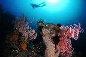 20180405_Amed_Bali 巴里島Amed潛水 Part 4:豐富的生態