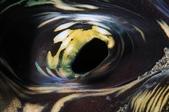 20180404_Amed_Bali 巴里島Amed潛水 Part 3:眼睛? (其實是車渠貝的呼吸孔啦)