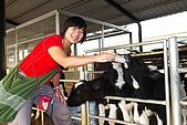 20090209鹽水蜂炮+新營+柳營:入園費只要20元還能抵消費,阿娟選擇餵小牛喝奶