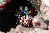 20191206-07_小琉球 Siaoliouciou,Taiwan:螳螂蝦