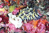 20080608東北角:大理石麵包海蛞蝓生產中