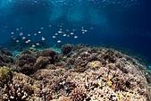 20191009_Panglao,Bohol Part 3:這就是健康的珊瑚生態,後方的黑點點都是魚