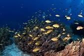 20191009_Panglao,Bohol Part 3:20191009 2nd Royal garden- 魚太多能見度差,都看不到後面的潛水員了(誤)
