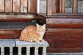 20190210-0211 恆春墾丁(下) Kenting,Taiwan :20190210 morning- 每天早上一開房門就可以看到霈福的2隻店貓在這一帶嘻戲,追逐麻雀