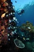20180405_Amed_Bali 巴里島Amed潛水 Part 4:Japanese wreck & diver