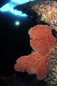 20170405 Ambon Diving 安汶潛水趣:這支潛水能見度很明顯差了點,不知與龐大的潛水人員群有沒有關係(圖上方可看到潛水員跟小船)