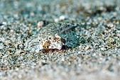 20190210-0211 恆春墾丁(下) Kenting,Taiwan :沙地上的隱型小魚,真的是融為一體