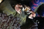 20170406-07 Ambon Diving 安汶潛水趣( The End):在大自然與人造物中求生存,是襪子嗎? :P