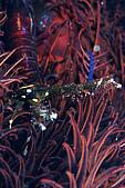 9607-東北角:海百合大胖蝦與蟹