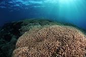 20180405_Amed_Bali 巴里島Amed潛水 Part 4:有種一望無際的壯闊感 + 密密麻麻的螢光綠金花鱸群
