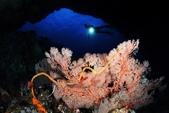 20170405 Ambon Diving 安汶潛水趣:另外一面,也是美美滴~