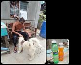 20171004-1011_Anilao Part VI:又到有羊咩咩的小村莊休息,村裏的狗兒好友善都來討摸.汽水一小瓶15P,2口喝完.買了4瓶請工作人員