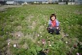 20131130-31苗栗苑裡公館 Miaoli,Taiwan:拍起來效果還真不錯,如果花兒密度再高一點就更棒了:)
