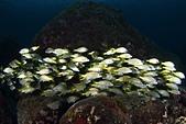 20210404-0406_墾丁 Kenting,Taiwan:如果這群魚出現在赤筆仔礁,就完美了