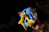 20180403_Amed_Bali 巴里島Amed潛水 Part 2:這普Nu拍得不錯,讓我想到龍頭