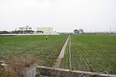 """20090209鹽水蜂炮+新營+柳營:""""無米樂""""的場景,到處都是一望無際的綠油油"""