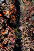 20180804-05_東北角 Northeast Coast,Taiwan (上):狹縫中的蝶魚群,這張可惜在大部份星珊瑚並沒有開花,不然就大加分