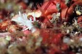 20170225-28 小琉球解潛水癮(上) Siaoliouciou,Taiwan:蓋頭蓋臉的魚骨頭,這次看到超多魚骨頭Nu,真神奇~(沒了,第1支就2張照片,因閃燈出問題,無奈,哈)