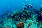 20090625國境之南最終回:出水口軟珊瑚區-阿娟被魚追著跑(戴頭套為了不想被拍到一頭亂髮