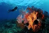 20180405_Amed_Bali 巴里島Amed潛水 Part 4:沉船附近的海扇聚落 (看得出來水很淺吧)