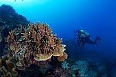 20090625國境之南最終回:阿娟與奇特的珊瑚組合