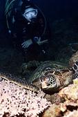 20181229-1230 小琉球(上)  Siaoliouciou,Taiwan:阿娟與海龜