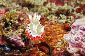 20080629東北角:三條溝大出的海蛞蝓之一