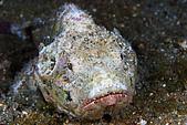 9607-東北角:這支白色石頭魚是小隻的