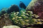 20210404-0406_墾丁 Kenting,Taiwan:20210404 1st赤筆仔礁-好愛這群笛鯛,除了後壁湖保護區,就這群魚最厲害了